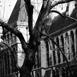 Into the trees: data di chiusura